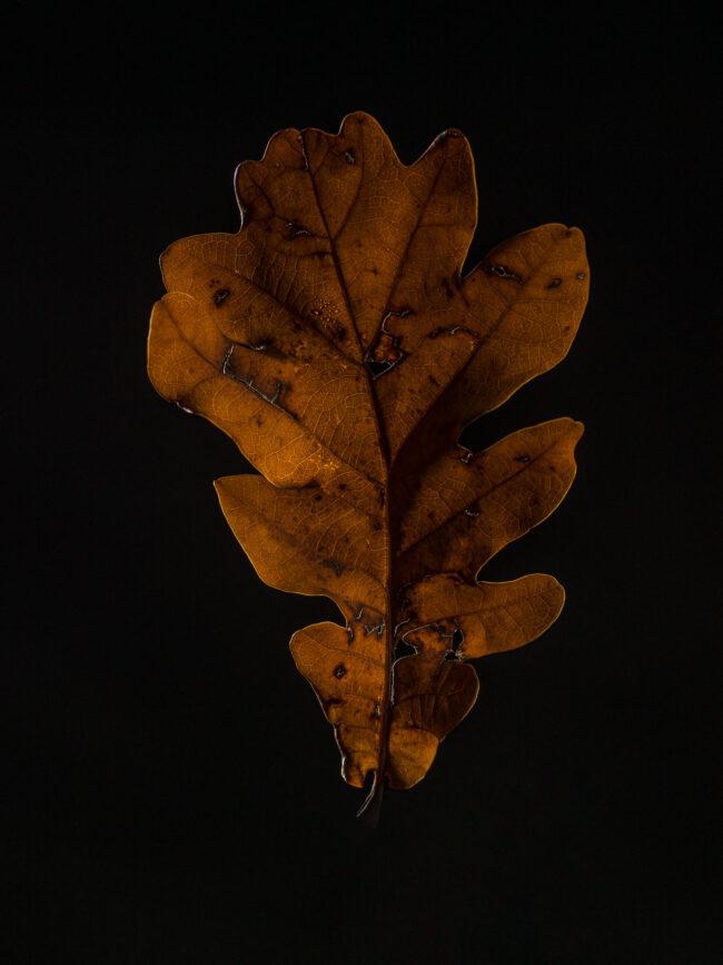 Herbst Still Life